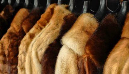 Выбор настоящей шубы из нутрии против зимней стужи
